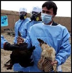 با هدف آشنایی مرغداران شهرستان های داراب ، فسا و زرین دشت؛ کارگاه آموزشی آنفولانزای فوق حاد پرندگان در داراب برگزار شد
