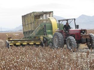 با برداشت مکانیزه  پنبه در شهرستان داراب؛ هزینه های تولید ۳۰ درصد کاهش  یافت