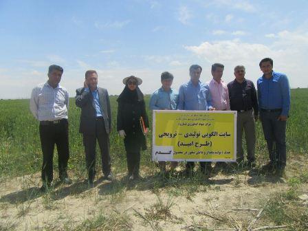 بازدید کارشناسان از  از طرح پهنه بندی مزارع و باغات شهرستان داراب