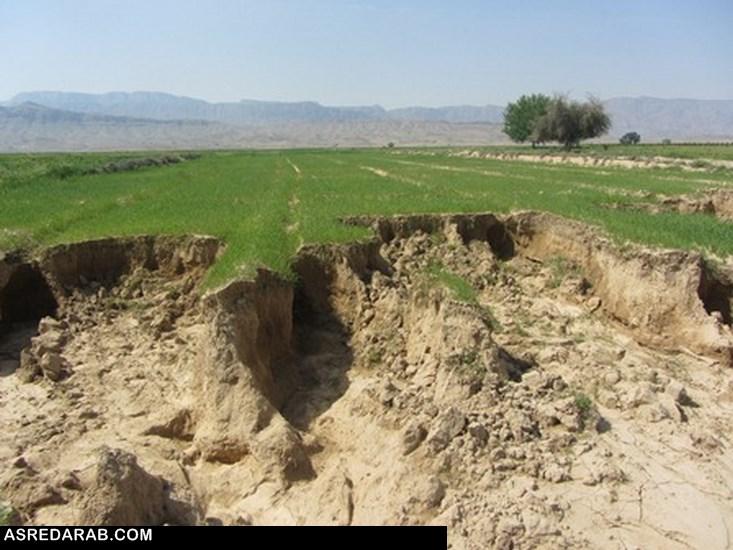 خسارت ۱۶۰ میلیارد ریالی سرما زدگی و بارندگی های اخیر به بخش کشاورزی شهرستان داراب
