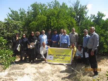 در قالب طرح امید؛ کارگاه آموزشی  تولید پایدار مرکبات و انار در داراب برگزار شد