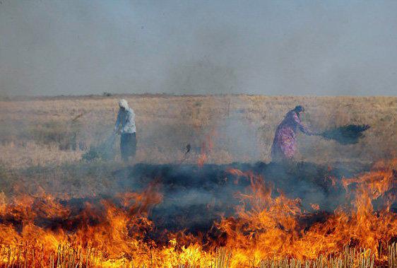 اطلاعیه محیط زیست داراب در خصوص ممنوعیت آتش زدن کاه و کلش