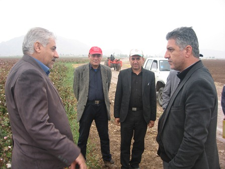 مدیر کل پنبه و دانه های روغنی  وزارت جهاد کشاورزی: نقش داراب در اجرای طرح های زراعی پنبه کاملا محسوس است