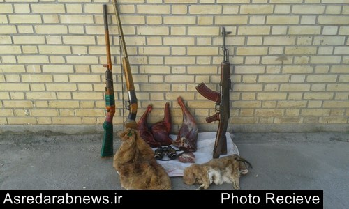 شكارچي غیرمجاز دو رأس بز وحشی در منطقه بيخ و بنگل داراب به چنگ قانون گرفتار شدند/  ۳ شکارچی تحت تعقیب