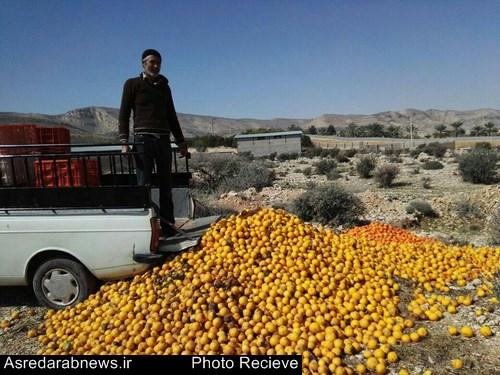 خسارت ۹۵۰ میلیارد ریالی بارندگی های اخیر به بخش کشاورزی شهرستان داراب