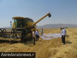 ۱۵ رقم کلزای طرح pvs در شهرستان داراب برداشت شد