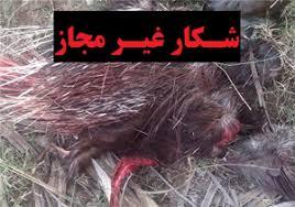 دستگیری بیست و دو شکارچی غیر مجاز توسط محیط بانان محیط زیست داراب
