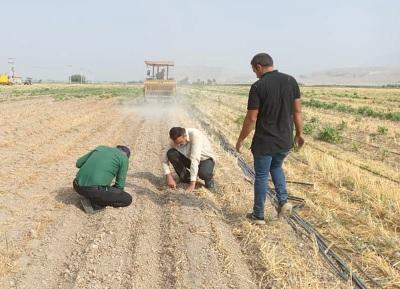 آغاز کشت دانه روغنی کنجد در شهرستان داراب