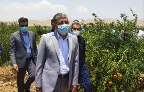 خسارت ۹۰ میلیاردی به باغات و مزارع داراب، در اثر طوفان، باران و تگرگ
